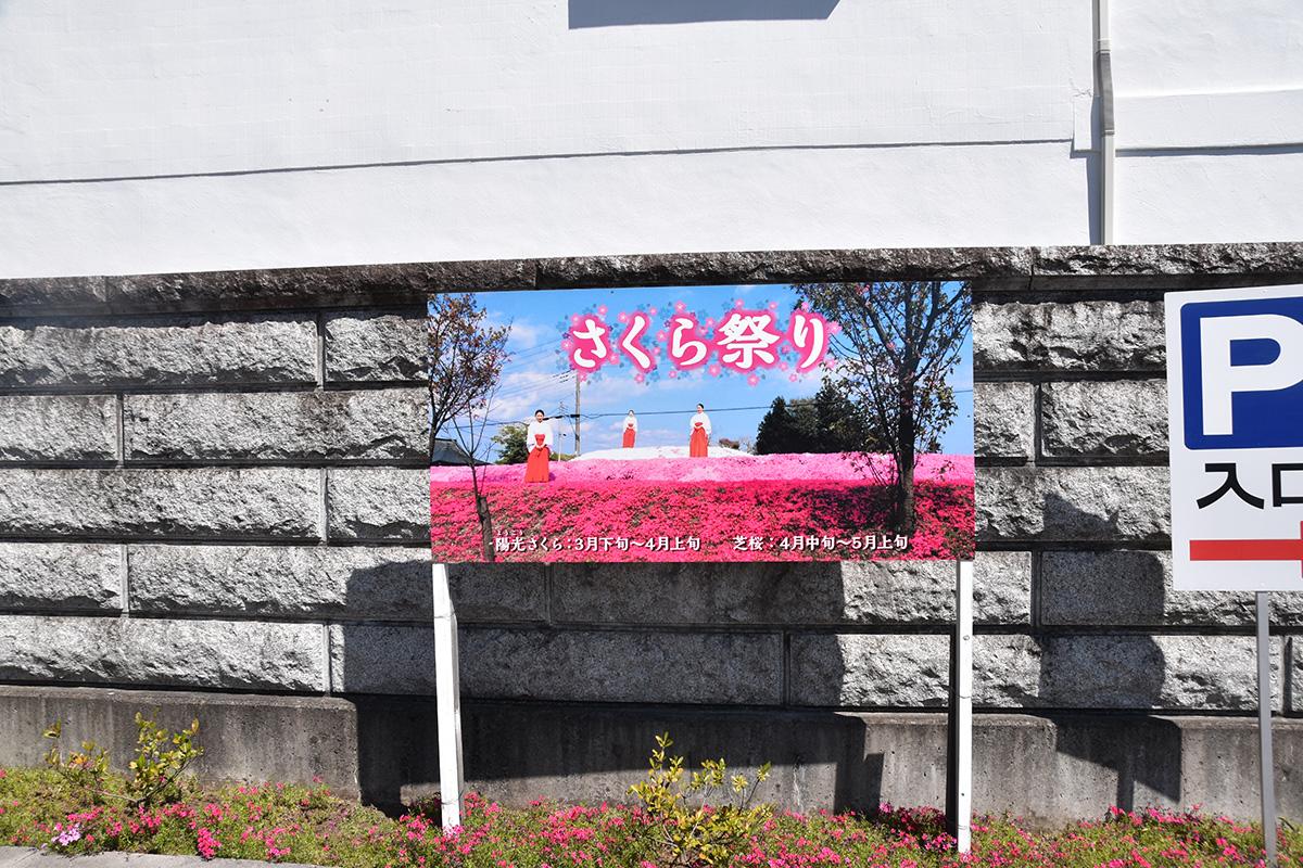 安住神社 芝桜